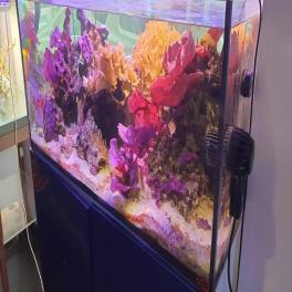 Bonjour à Tous , suite a l'annulation d'un client pour l'aquarium 120 XL de demo du magasin , nous remettons en vente  cet aquarium 120X80X50 ELOS 120XL  Cuve +Meuble+decantation  a venir Chercher a NICE 06000.  PAS D'EXPEDITION .  PRIX 600€