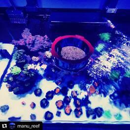 #Repost @manu_reef  Les hublots @bashseausa sont disponibles en  boutique ... ・・・ #bashsea #hublot #reef #reefs #reefaddict #reeftank #reefporn #reefgeek #reeftanks #reefaquarium #ultracorals #ultracoral  #corail #reeflife #reefs #reefcandy #tunze #aquaillumination #bubbleking #aquamedic #fish #instantocean #allmymoneygoestocorals #elos #coral #coralreef #corals #coralporn #neoquarium