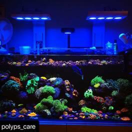 #Repost @polyps_care with @make_repost ・・・ Bac demo elos food!  #elosamerica #reef #reefporn #reefaddict #reefaholik #reefoftheday #zoagarden #coraladdict #coraloftheday #reefers4reefers #aihydra52hd #aquaillumination #allmymoneygoestocoral #polyp #polyps #aquarium #acancoral #acanthastrea #aquariumhobby #euphyllia #coral #tunze #zoa #nemo #saltwateraquarium #saltwatertank #marineaquarium #apexneptune