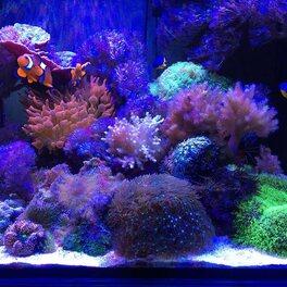 Quelle superbe vue sur l'aquarium Elos Midi de @brunoridolfi  Faire simple c'est toujours la clef de la réussite .. merci de ta confiance depuis le 1 en jour !  #elos #planetcompact #neoquarium