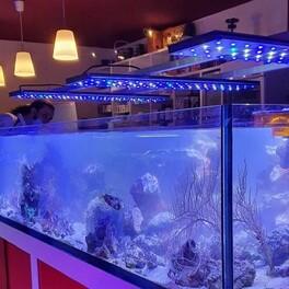 Et de 3 rampes sur la cuve de coraux  Plus d'info en MP sur les rampes Neo light Us mode  #neolight #upgrading #neoquarium #aquastudionice
